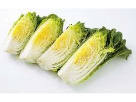 Quarter Slicer for Cabbage and Chinese Cabbage - picture5' - Click to enlarge