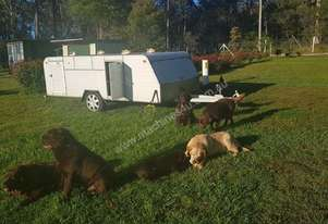 Champion Dog Transport Trailer - $4590. Reduced from $5950